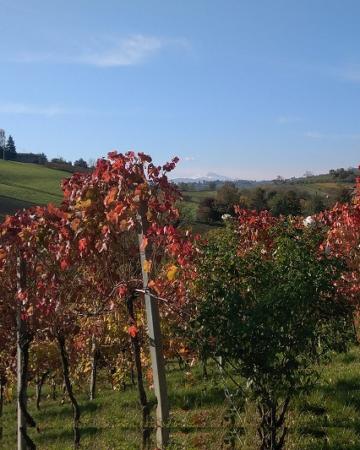Wine Experience In Emilia